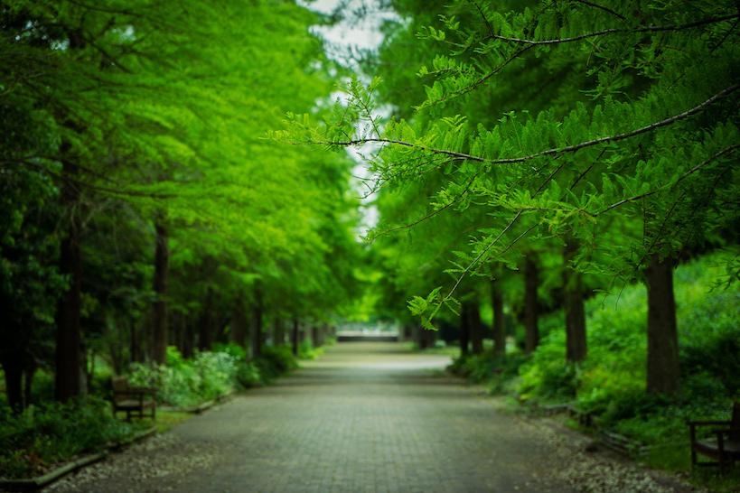 【鋼の錬金術師のロケ地】兵庫県加東市の播磨中央公園がデカ過ぎた!