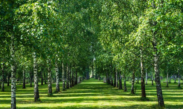 【世界遺産】スウェーデン・ストックホルムの「森の墓地」で心を清める