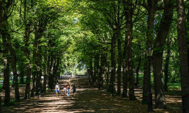 ストックホルムの明治神宮外苑!Humlegården の並木道にウットリ♡